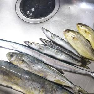 2019年に瀬戸内で釣れた魚を振り返ってみた / 魚種のバラエティーが豊富で瀬戸内海のポテンシャルの高さを再認識した