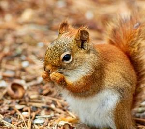 噛む回数を自然と増やす方法