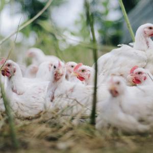 世界初。中国で鳥インフルエンザH10N3型に感染。新型コロナの次は、鳥インフル?