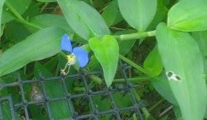 My Favorite Wild Flower