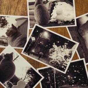 写真整理とデジタルゴミ屋敷