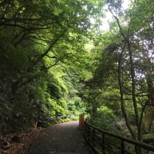 健康のための森林セラピー