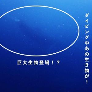 和歌山県串本町でダイビング中、あの巨大生物が!
