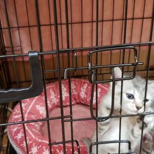 かわぐち犬猫保育園だより 6月5日