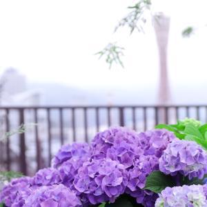しっとり  雨のハーバーランド