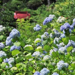 有珠善光寺自然公園~桜と紫陽花と紅葉名所の交通と駐車場は?