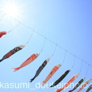 江別こいのぼりフェスタ写真 2017年 【北海道 江別市】