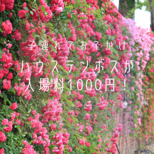 【子連れでおでかけ】ハウステンボスが入場料1000円、長崎県民限定価格で営業!|バラにあじさいにピカソに♥