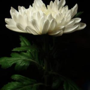 命は無限じゃない・・一緒に笑いあえない悲しみを知ってしまった時に。