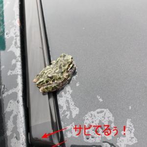 車の上にカエルちゃん