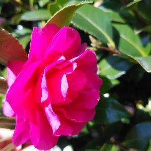 我が庭、探検!!季節の植物。〜春眠暁を覚えず編〜