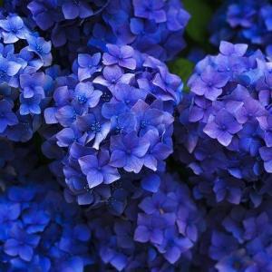 うちの庭、探検!季節の植物。ほたるぶくろが・・・