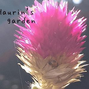 家の庭を探検!季節の植物~秋の日差しに虫も誘われる!?~