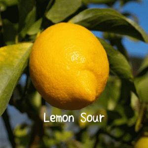 レモンを収穫してレモンサワーを作りました。