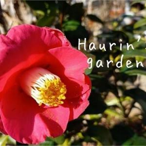 Haurin's Garden!季節の植物~春がやって来た〜