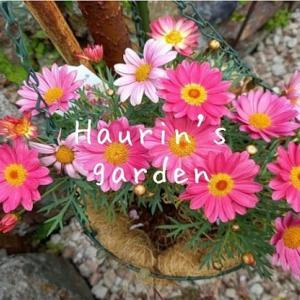 家の庭を探検!3月・4月の季節の植物~賑わいだした春~