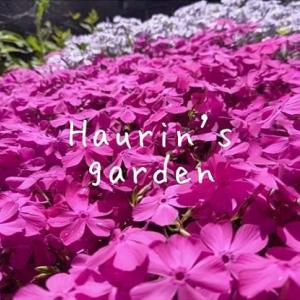 うちの庭を探検!4月の植物~春爛爛爛漫~