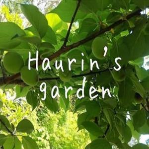 庭で収穫した梅で『梅シロップ』作りました