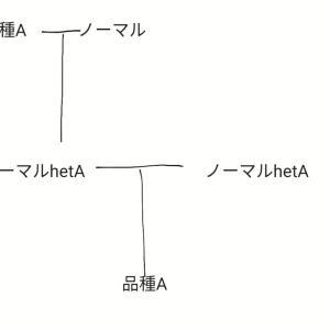 【レオパ】遺伝について