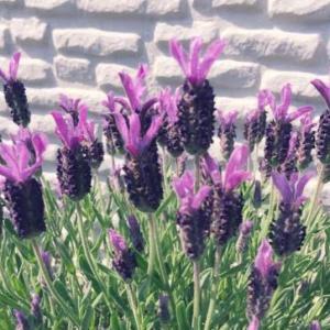 ある花を「闇落ちエビフライ」と呼んでいたが例えが的確すぎて笑う