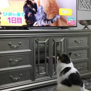 猫がネコを見る