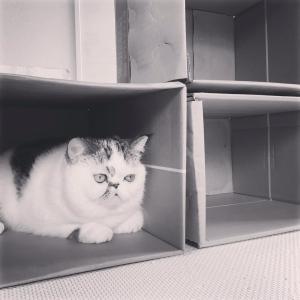 アートな猫