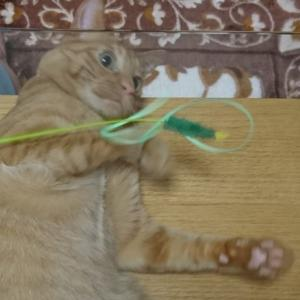 猫と遊ぼう!じゃれ猫ブンブントンボ