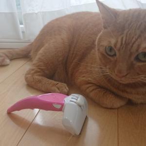猫ちゃんのブラッシング!フーリーイージーを使った感想
