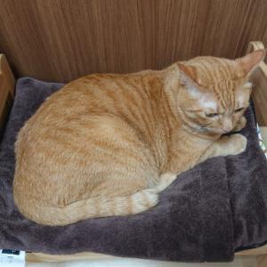 猫用にIKEAのおままごとベッドを寝室に置いたら快適になった話し