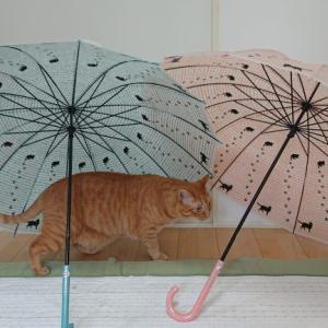 【猫好きさんにおすすめ】猫柄のビニール傘・猫柄の折りたたみ傘を購入しました。