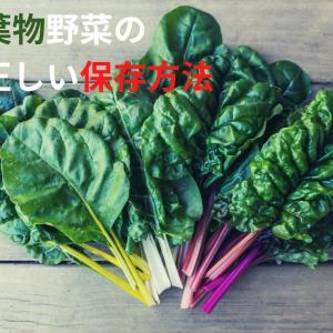 【野菜の保存方法シリーズ】葉物野菜の正しい保存法