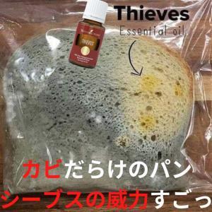 (写真注意)防腐剤が入っていないパンを30日間放置した結果
