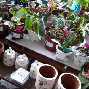観葉植物展示イベント~サイドウォークジンバラン