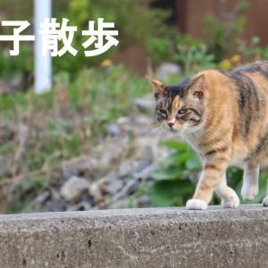 三毛子さんぽ 200528