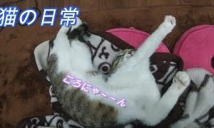 【かわいい 癒し猫動画】【猫動画】【ねこ ネコ キャット CAT 】【036】
