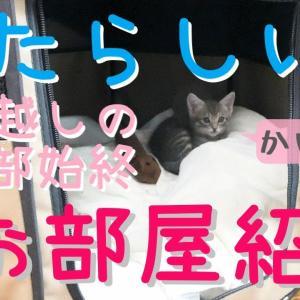 【保護猫】新しいお部屋へお引越しした子猫~お部屋紹介~【生後46日】Kitten moved to a new room