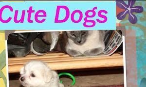 【犬 いぬ イヌ】 犬 かわいい Small Dogs Puppy 13