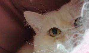 夜の猫ライブ配信 200605