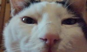 かご猫ライブ200606