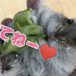 ♥️可愛い動物の癒され動画♥️