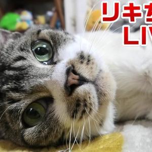 リキちゃんと一緒に♪一週間お仕事お疲れ様ライブ☆猫ライブ・夜のねこ【リキちゃんねる・猫動画】Cat video きじしろねこのいる暮らし