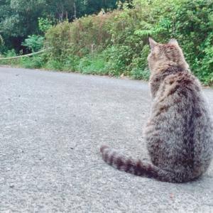 ひたすら犬の帰りを待っている猫 Cat waiting for dog's return