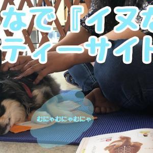犬のサマースクール。ドッグマッサージ『イヌなで』セミナー!!湘南ティーサイトレポ