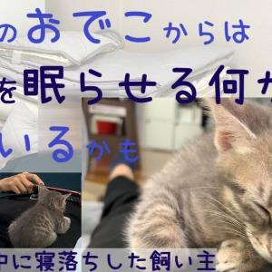 【保護猫】飼い主を寝床にする猫シリーズその9~また飼い主を寝かしつけてしまった子猫~【生後56日】The kitten who put the owner to sleep again