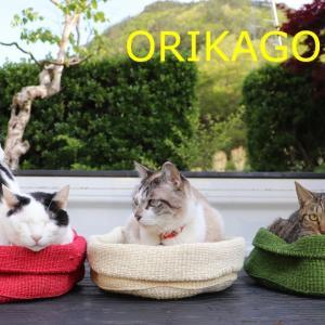 ORIKAGOに入る猫 200617