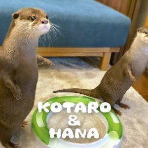 カワウソコタローとハナ 消防車のサイレンに直立不動 Otter Kotaro&Hana Stand Up and Hear The Siren