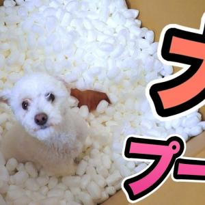 犬猫室内プール作ってみた!!【戌年】Dog pool PDS
