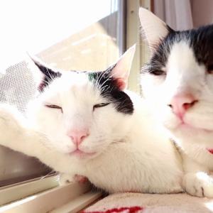 網戸に手をかけて眠る猫 200623