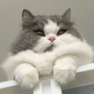 怒られても平気な猫