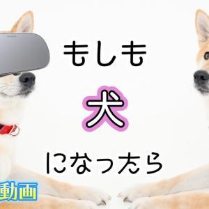 もしも犬だったら…VR180 【 こうじょうちょー  】